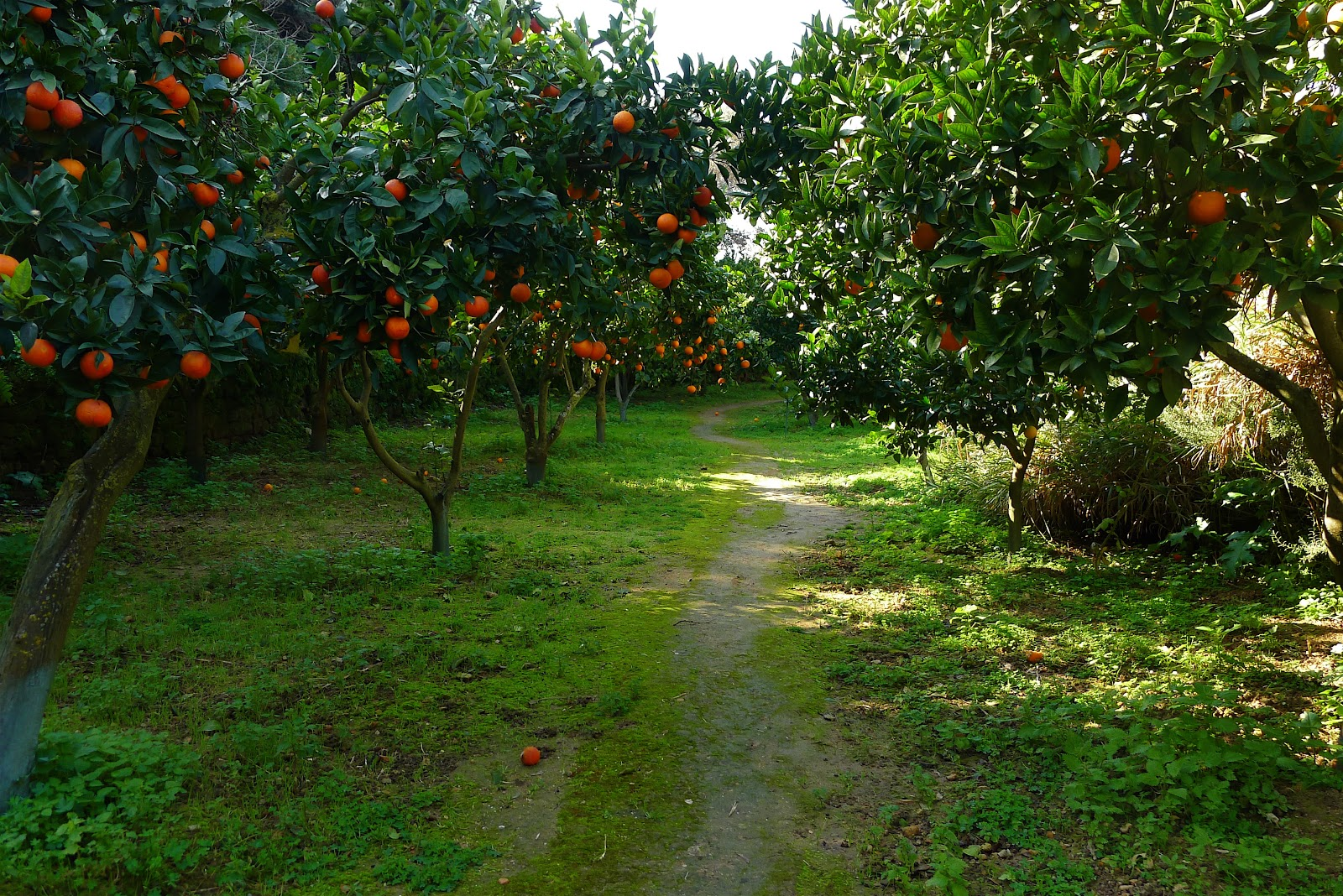 Agrigento-Kolymbreta garden3