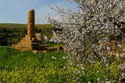 Agrigento-Kolymbreta garden2