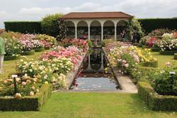 Rožni vrt Davida Austina