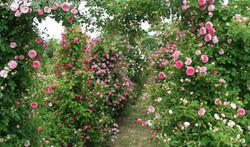 Vrtnice Beograd
