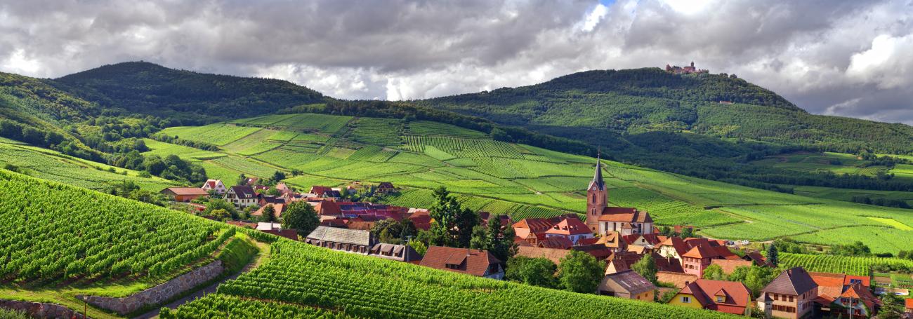 Alsace_Rodern_Wine_Road_©_Zvardon_CIVA