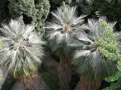 90_1-15_8-orto_botanico_di_catania8_archiviograndigiardiniitaliani_100giardiniperexpo2015