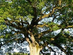 tree-56013_1920