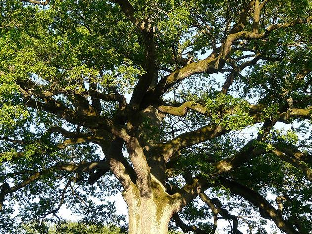 tree-56013_1920.jpg