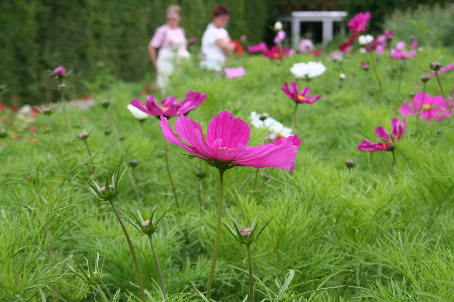 EOL-garden tours (15)