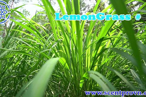 Lemon Grass(Xả Chanh)