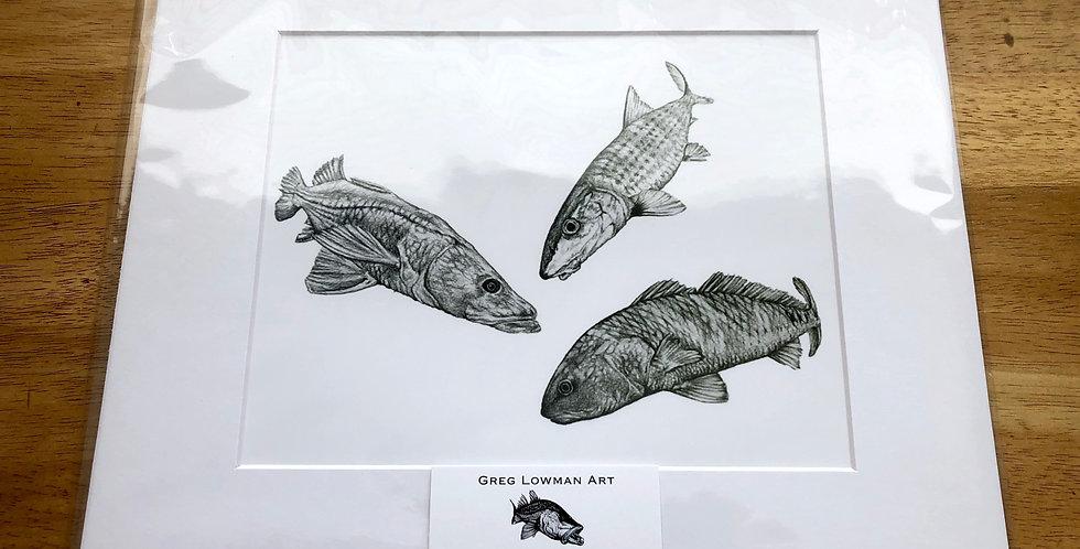 inshore saltwater game fish art print