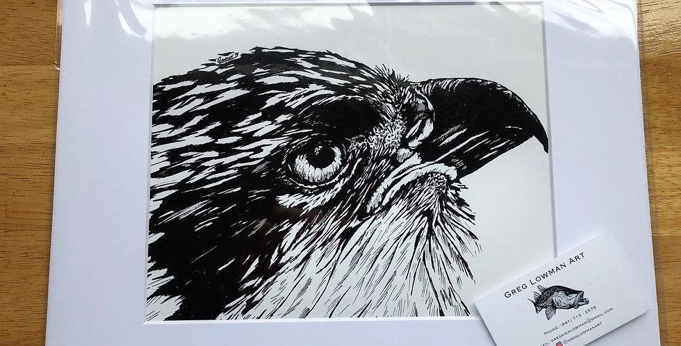 unframed osprey bird art prints for sale
