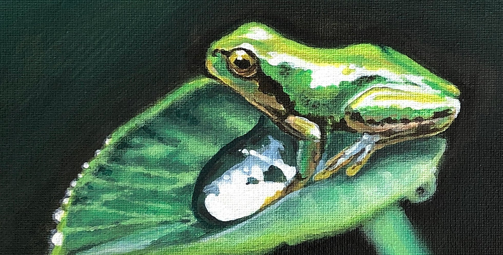 acrylic frog on a leaf painting for sale