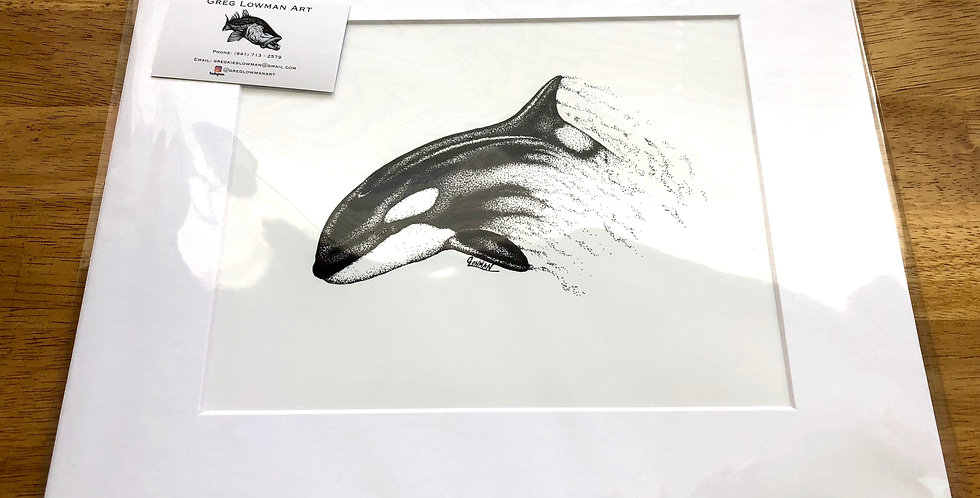 unframed matted orca killer whale art print for sale