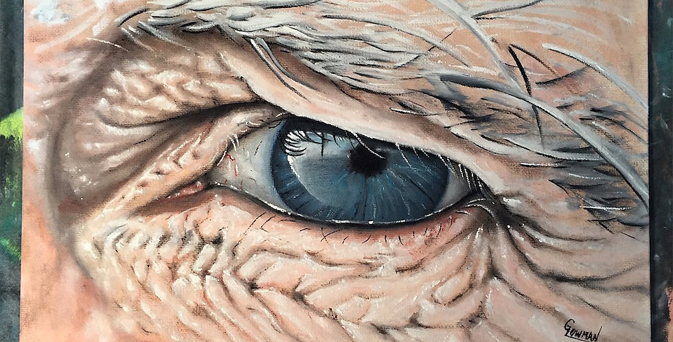 wise old eye painting