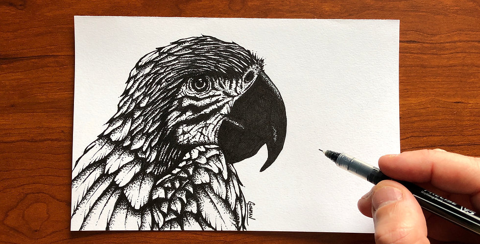 original macaw ink drawing for sale