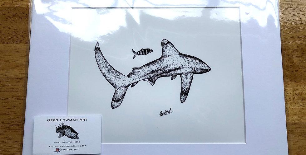 unframed whitetip shark art prints for sale