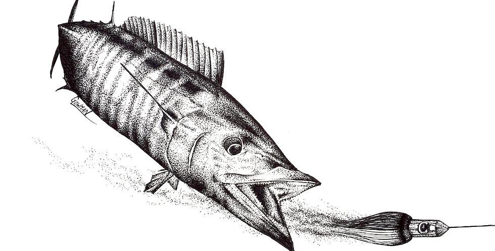 wahoo game fish and islander trolling lure drawing