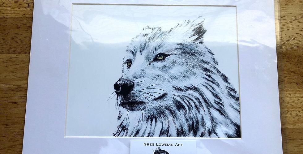 White Wolf Art Print