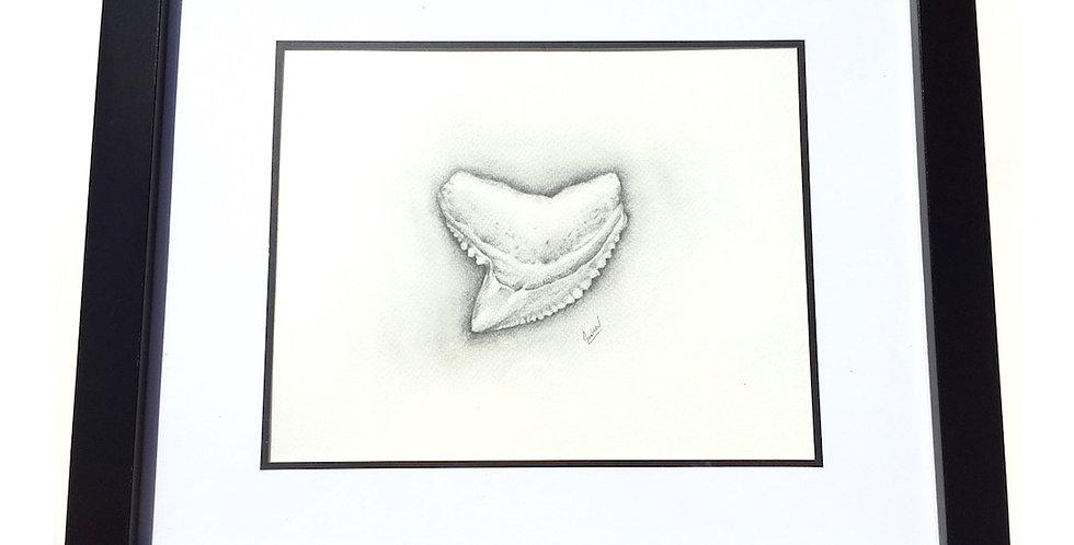 original tiger shark tooth pencil drawing