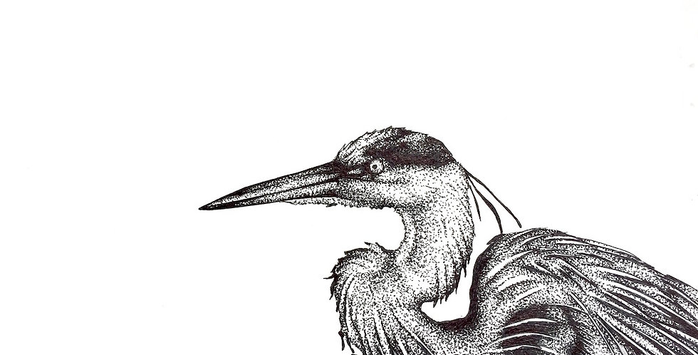 great blue heron pencil drawing for sale
