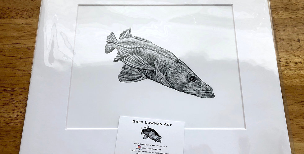 unframed snook game fish art print