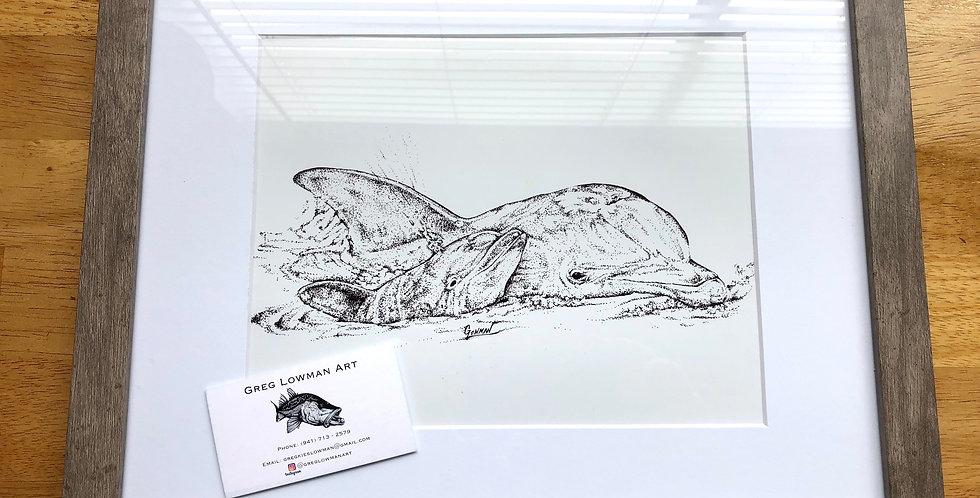 Framed bottlenose dolphin art print