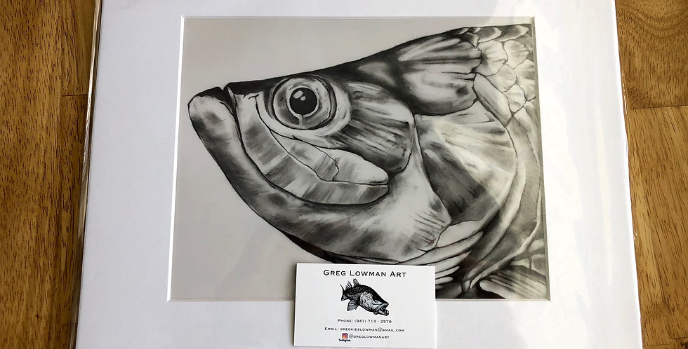 unframed tarpon game fishing art prints for sale