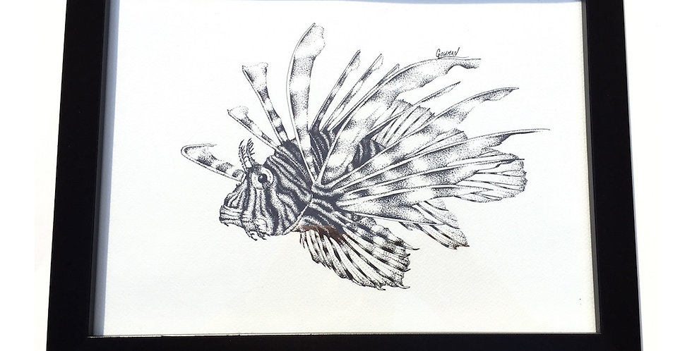 original volitan lionfish ink drawing for sale