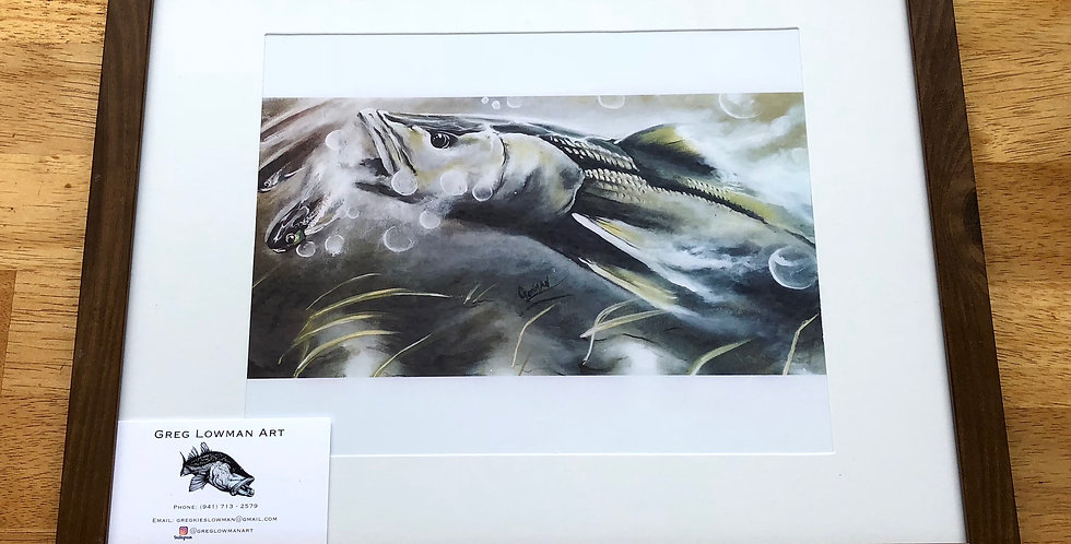 framed snook game fish art print