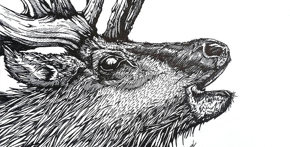 original bull elk ink drawing for sale