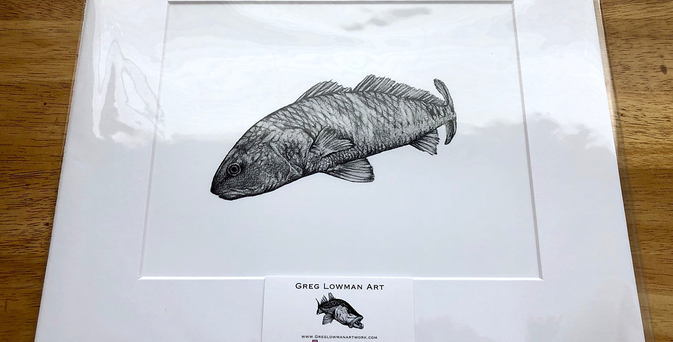 unframed red drum game fish print