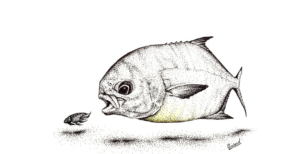 original pompano (Trachinotus carolinus) fishing drawing