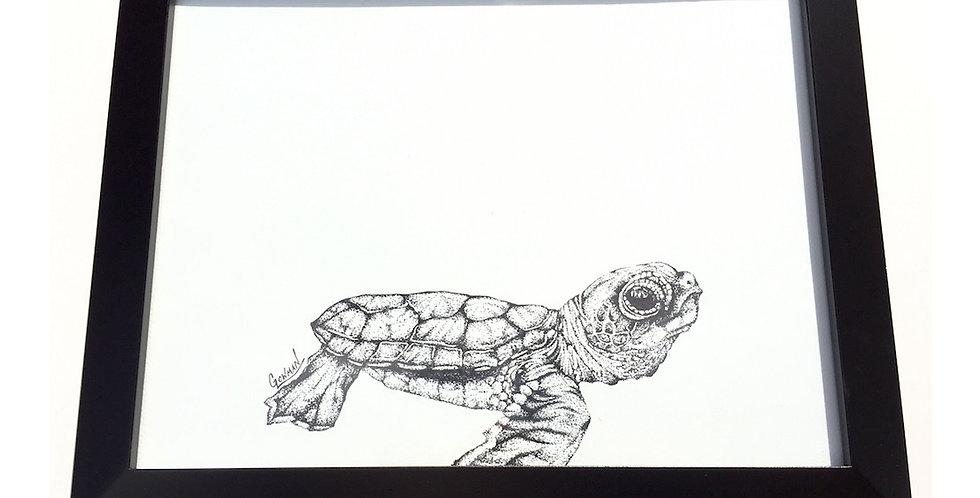 original sea turtle hatchling drawing