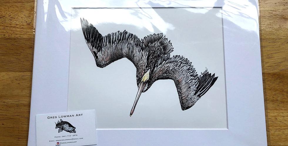 unframed pelican bird art prints for sale
