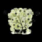 o bosque das patinhas multiservicos animais de estimacao porto norte maia matosinhos