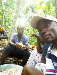 Pastor Moses' Cocoa Production