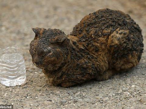 Animais são queimados durante incêndio florestal na Califórnia