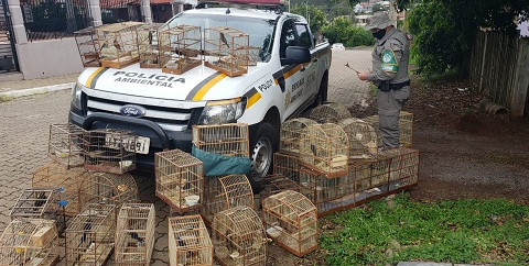 Operação apreende pássaros silvestres e autua criadores em Taquari