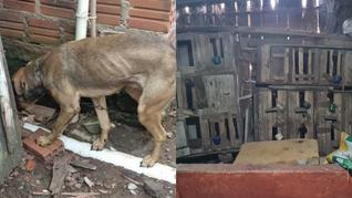 Prisão por maus-tratos e galos de rinha em Taquari/RS