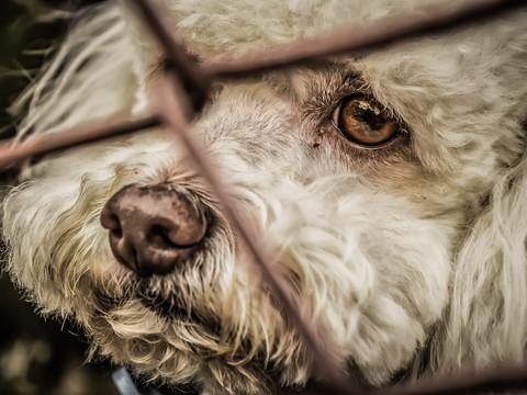 Justiça autoriza a invasão domiciliar para resgate de animais sob crime de maus-tratos