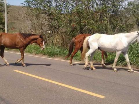 Prefeitura de Taquari/RS anuncia que recolherá cavalos soltos em locais públicos
