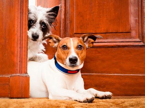 PL obriga síndico a comunicar maus-tratos de animais em condomínios
