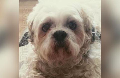 Cachorro ingressa na Justiça pedindo indenização a pet shop por danos físicos e psicológico