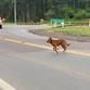 Pórtico de TAQUARI/RS se torna local de abandono e crueldade de ANIMAIS