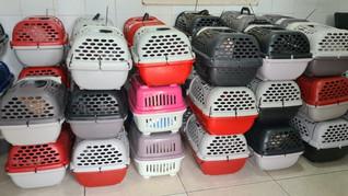 ONG Salvadores e Saga Lajeado encaminham 42 gatos para castração