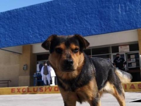 Cãozinho espera há mais de um mês por dono que morreu de COVID19
