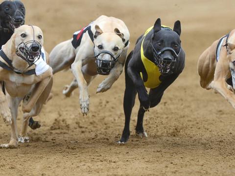 Deputado apresenta projeto de lei para proibir corrida de cães no RS
