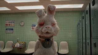 """Curta-metragem """"Salve o Ralph"""" detalha a vida de animais usados em testes e os danos em seus corpos"""