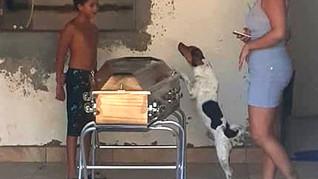 Cachorro chora e acompanha velório da tutora ao lado do caixão na Bahia