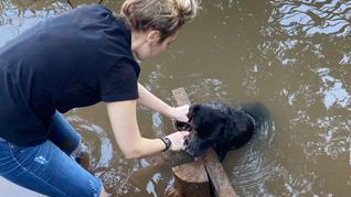 ONG SALVADORES: Cão é encontrado amarrado em tijolo dentro do Rio Taquari