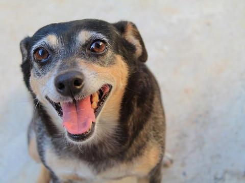 """Estúdio de fotografia cria projeto """"Pet Click"""" para ajudar ONGs de Taquari e Lajeado"""