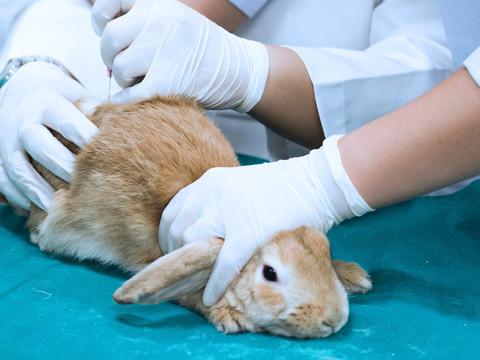 STF decide que estados possuem total competência para proibir testes em animais