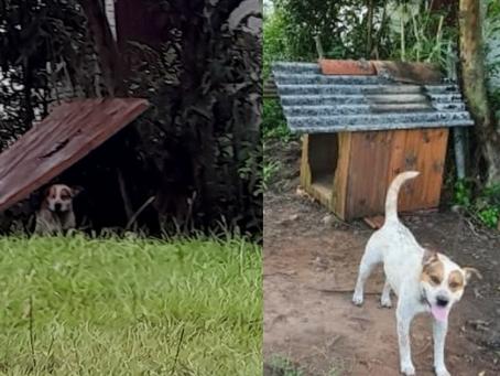 Visita educativa da ONG SALVADORES garantiu que cão se abrigasse melhor da chuva